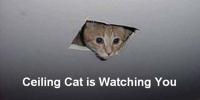 Ceiling cat - Cat Meme Of The Decade - lol   cat memes   funny ...