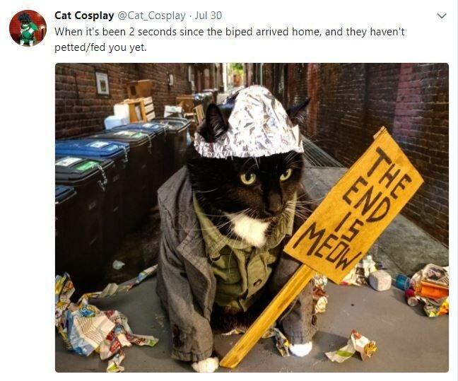 Tin Foil Hat For Cats | Cats, Crazy cats, Tin foil hat