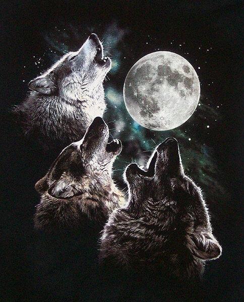 3wolfmoon.jpg