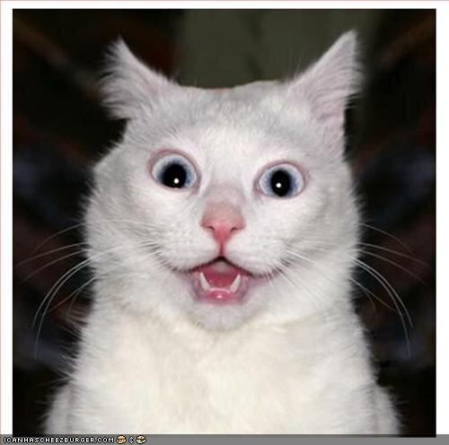 cat-big-eyes.jpg