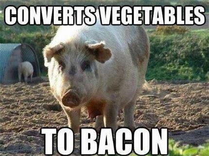 Image result for Bacon meme