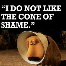 Image result for cone of shame
