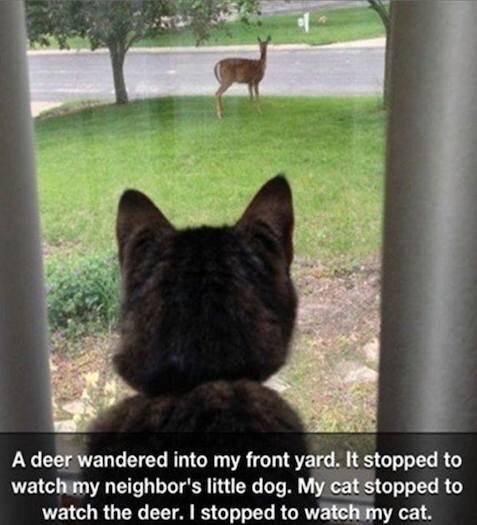 Animal Memes - Everyone watching | Funny Memes