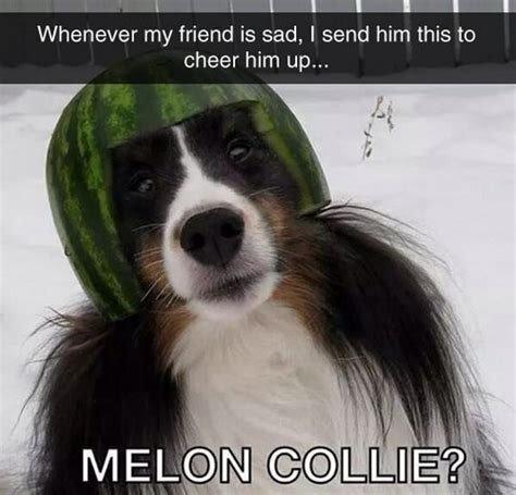 Image result for cheer up dog meme
